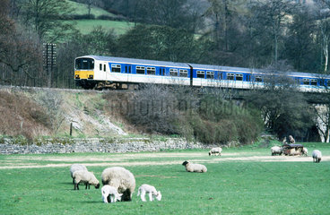 Sprinter train in the countryside with sheep  c 1980s.
