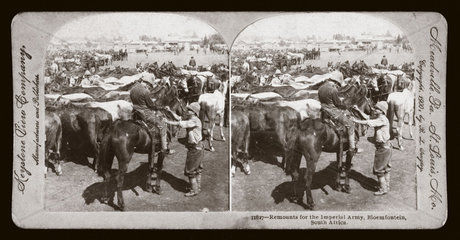 'Remount for the Imperial Army  Bloemfontein  South Africa'  c 1900.