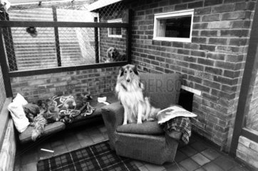 Guests in a 'Doggie Exclusive Hotel'  December 1980.