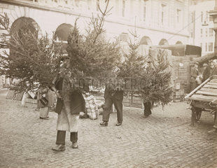 Porters carrying Christmas trees  Covent Garden  London  29 November 1935.
