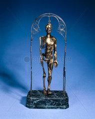 Anatomical male figure.