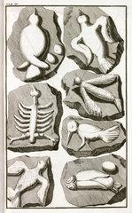 Fake fossils of birds  1745.