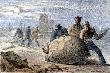 'Catching Turtles'  c 1845.