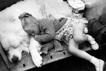 Little girl asleep with her dog  Blackpool Dog Show  June 1973.