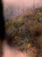Autochrome of a herbaceous border  c 1910.