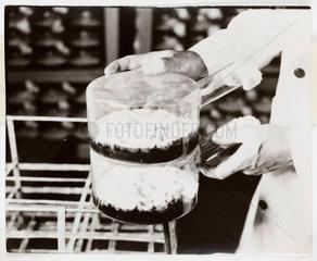 Penicillin culture flasks  1943.