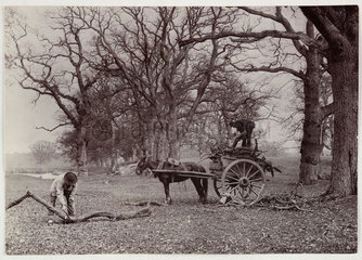 Fallen branches  c 1890.