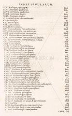 Index to illustrations in Bockler's 'Theatrum Machinarum Novum'  1662.