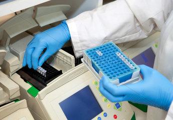 Muenster  Deutschland  eine MTA stellt PCR-Reaktionsgefaesse in einen Thermocycler