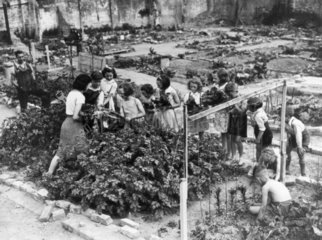 Young gardeners at work on their plots  Lon