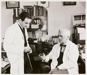 Alexander Fleming  St Mary's Hospital  Paddington  London  1945.