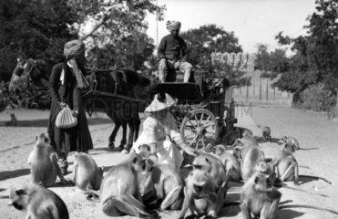 European tourist woman with monkeys  c 1910