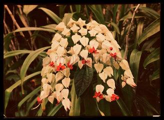 Flowers  c 1940.