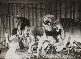 Bertram Mills Touring circus in training at Ascot  1 April 1936.
