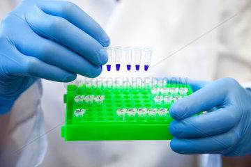 Muenster  Deutschland  eine MTA mit PCR-Reaktionsgefaessen am Institut fuer Mikrobiologie