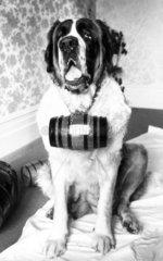 St Bernard dog  c 1980s.