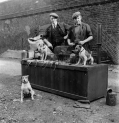 Ratcatchers with their dogs and dead rats  1953.