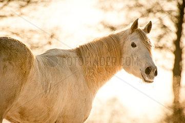 Pferd in Wintersonne