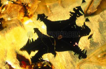 Iron Slag. Light micrograph in darkground l