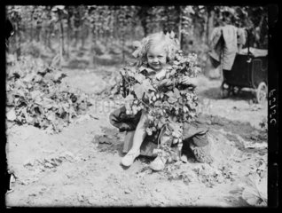 Young hop picker  31 August 1937.