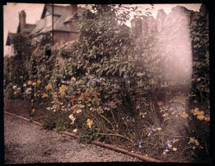 Autochrome of flowers  c 1908.