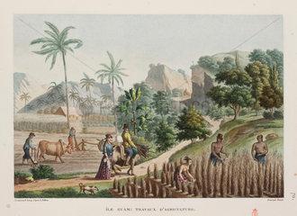 Agricultural scene  Guam  1817-1820.