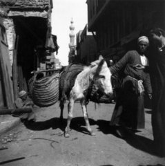 Donkey with loaded saddle-bags  Middle East  c 1910s.