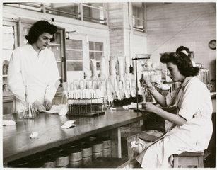 'Girls Preparing Nutrient Media for Bacteriological Test'  1946.