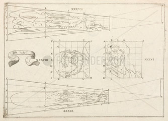 Plane anamorphosis by Jean Francois Niceron  1638.