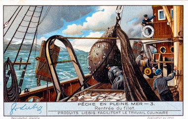 Bringing in the nets  French Liebig trade card  early 20th century.