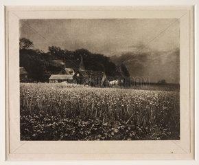 'The Onion Field'  1890.