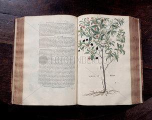Leonhart Fuch's book on herbals  1545.
