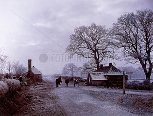 Cows in the road by a cottage  c 1890s.