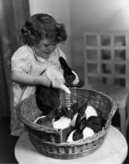 Girl picking up a rabbit  c 1930s.