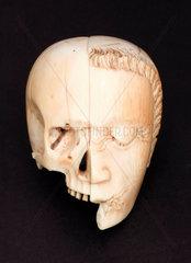 Ivory model of a head  half face and half skull.