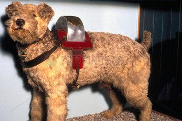 'Laddie'  railway collecting dog  1948.