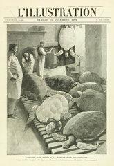 Turtle soup  London  1901.