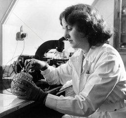 Laboratory technician examining a human brain  17 March 1957.