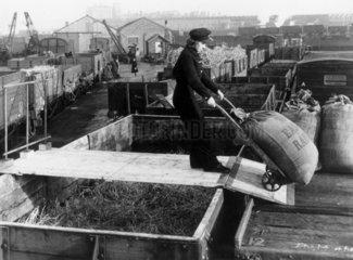 Woman railway worker loading grain sacks  1
