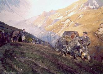 Yak transport in Tibet.