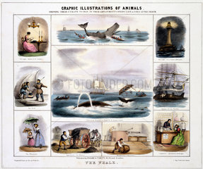 'The Whale'  c 1845.