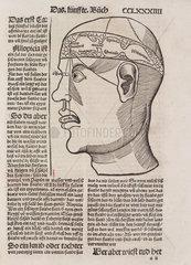 Phrenological head  1512.