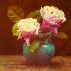 Roses  c 1910-1915.