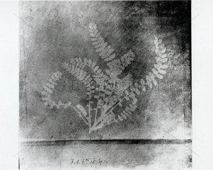 Fern leaf  6 February 1836.