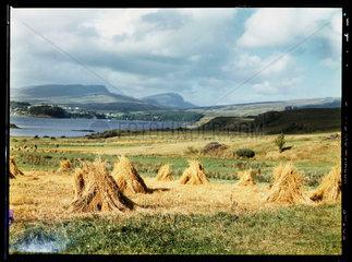 Harvest landscape  c 1943