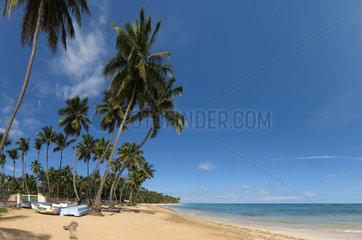 Las Terrenas  Dominikanische Republik  Fischerboote und Palmen am Strand