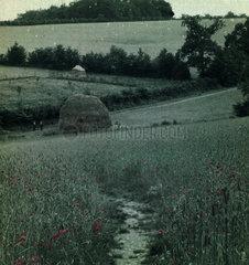 Haystack  Sussex  c 1910-1915.