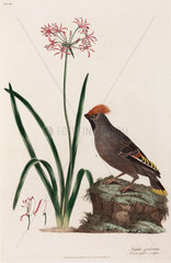 Exotic bird and lily  1776.
