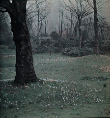 'Twixt Winter and Spring'  c 1910-1915.