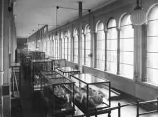 Gallery 13  Science Museum  London  November 1932.